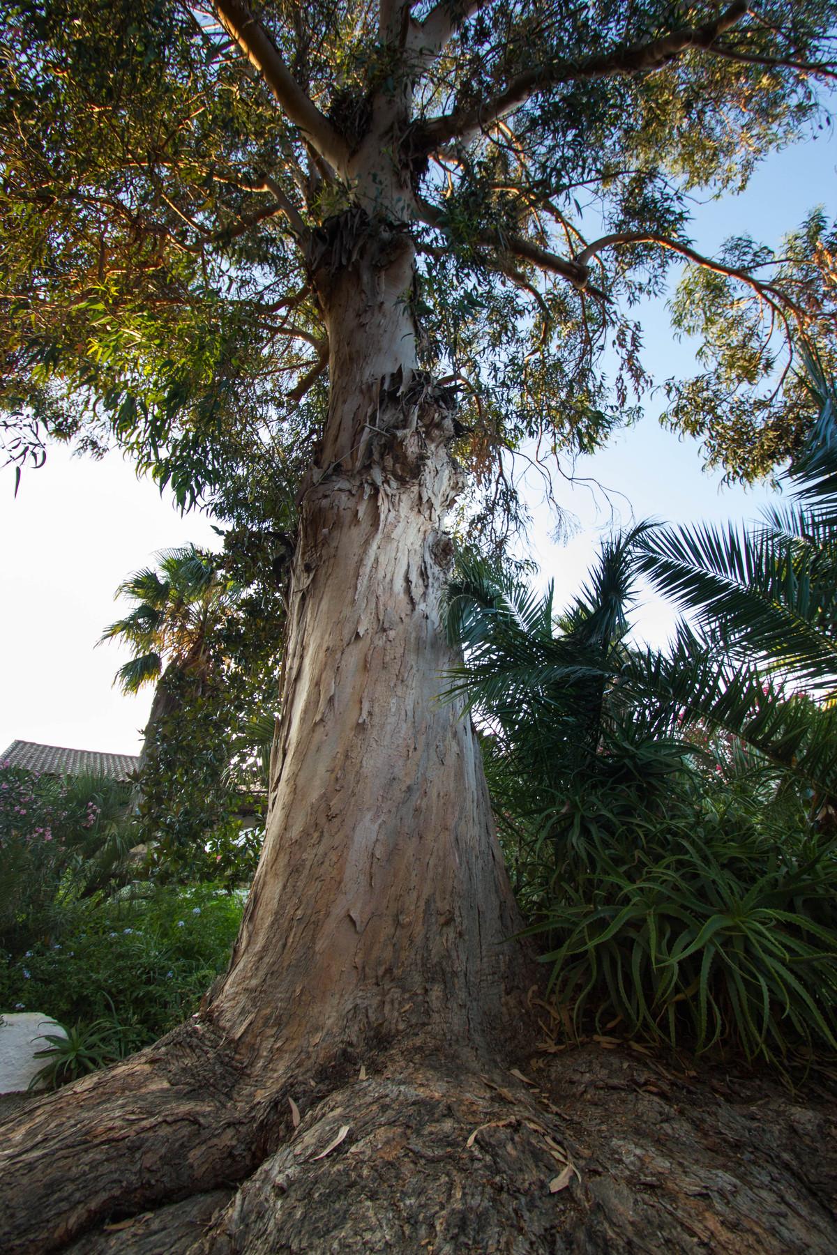 Aloe In Giardino il giardino - relais de bravone
